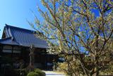 広雲寺の緑吉野