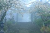 英彦山 山桜と銅の鳥居