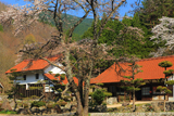 空城さくら亭の桜
