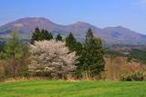 真庭市 山桜と蒜山三座