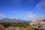 蒜山ハーブガーデンハービルの桜