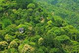 新緑の嵐山と大悲閣