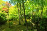 大河内山荘 新緑の滴水庵
