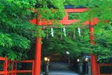 大田神社 鳥居と新緑