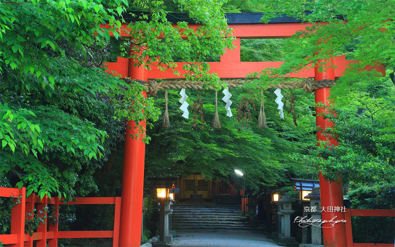 大田神社 鳥居と新緑 の壁紙 1280x800