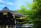 佛光寺本廟 椛花と御廟