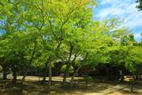 日野誕生院 新緑の書院