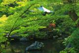 慈氏院 新緑の池泉庭園