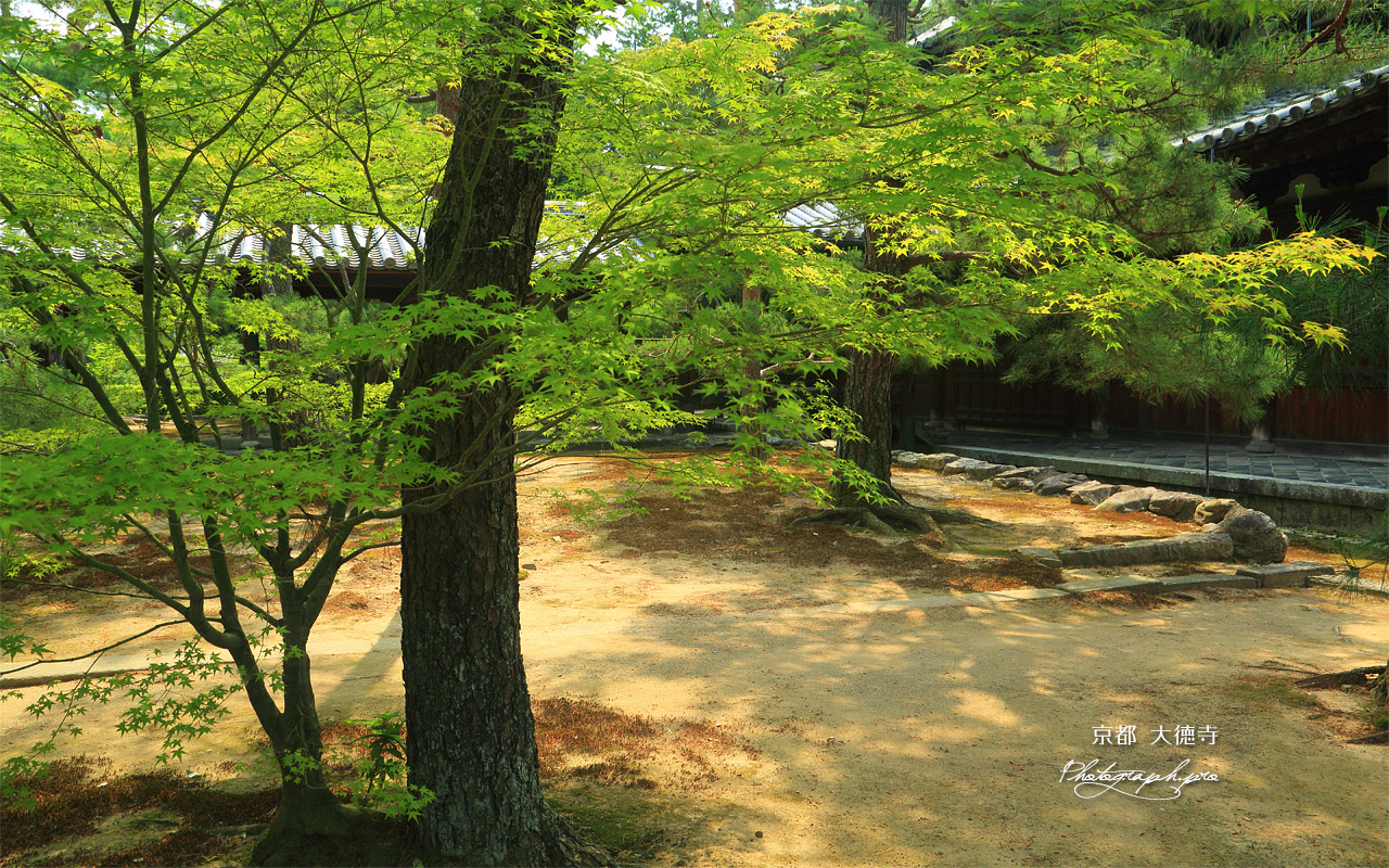 大徳寺 新緑と仏殿 壁紙