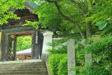 本願寺北山別院 新緑と山門