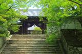 曼殊院 新緑の勅使門