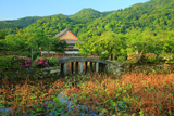 天龍寺 放生池と新緑の寿寧院本堂