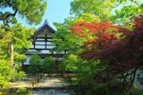 松巖寺 春紅葉と新緑の庫裡