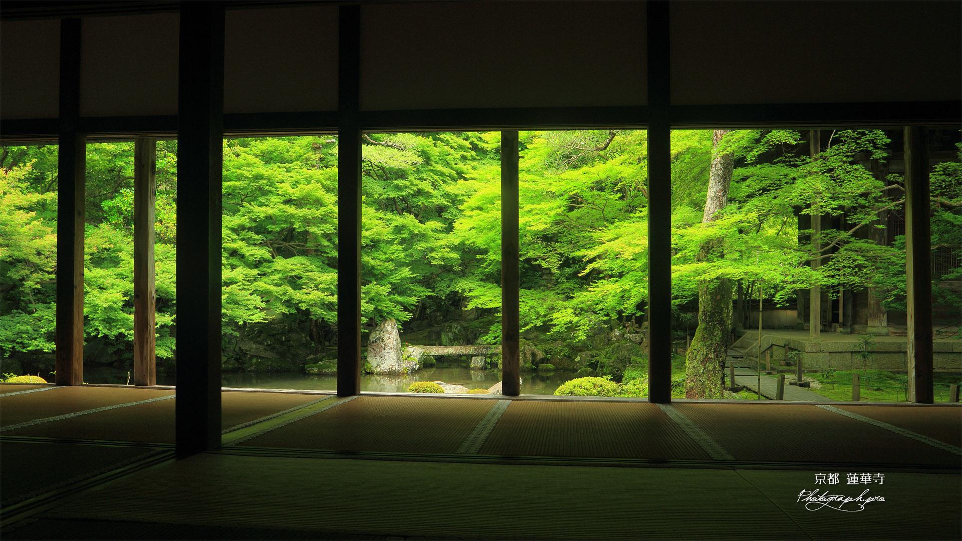 蓮華寺 柱越しに新緑の庭園 の壁紙 19x1080