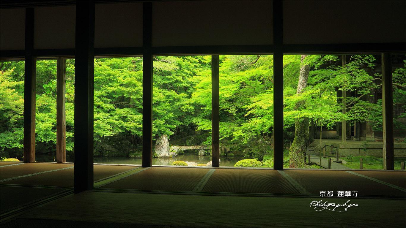 蓮華寺 柱越しに新緑の庭園 壁紙