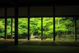 蓮華寺 柱越しに新緑の庭園