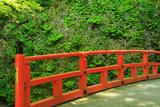 大原 律川橋とユキノシタ