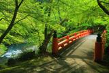 梅ケ畑 新緑の指月橋