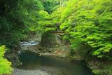 梅ケ畑 新緑の清滝川と指月亭