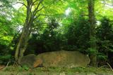 新緑と京見峠歌碑