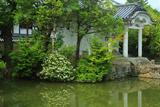 妙心寺 蓮池のクチナシ