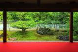 東林院 諸行無常の沙羅双樹
