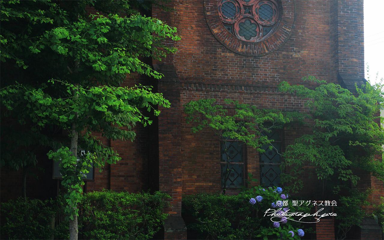 聖アグネス教会 あじさいと鐘塔 壁紙