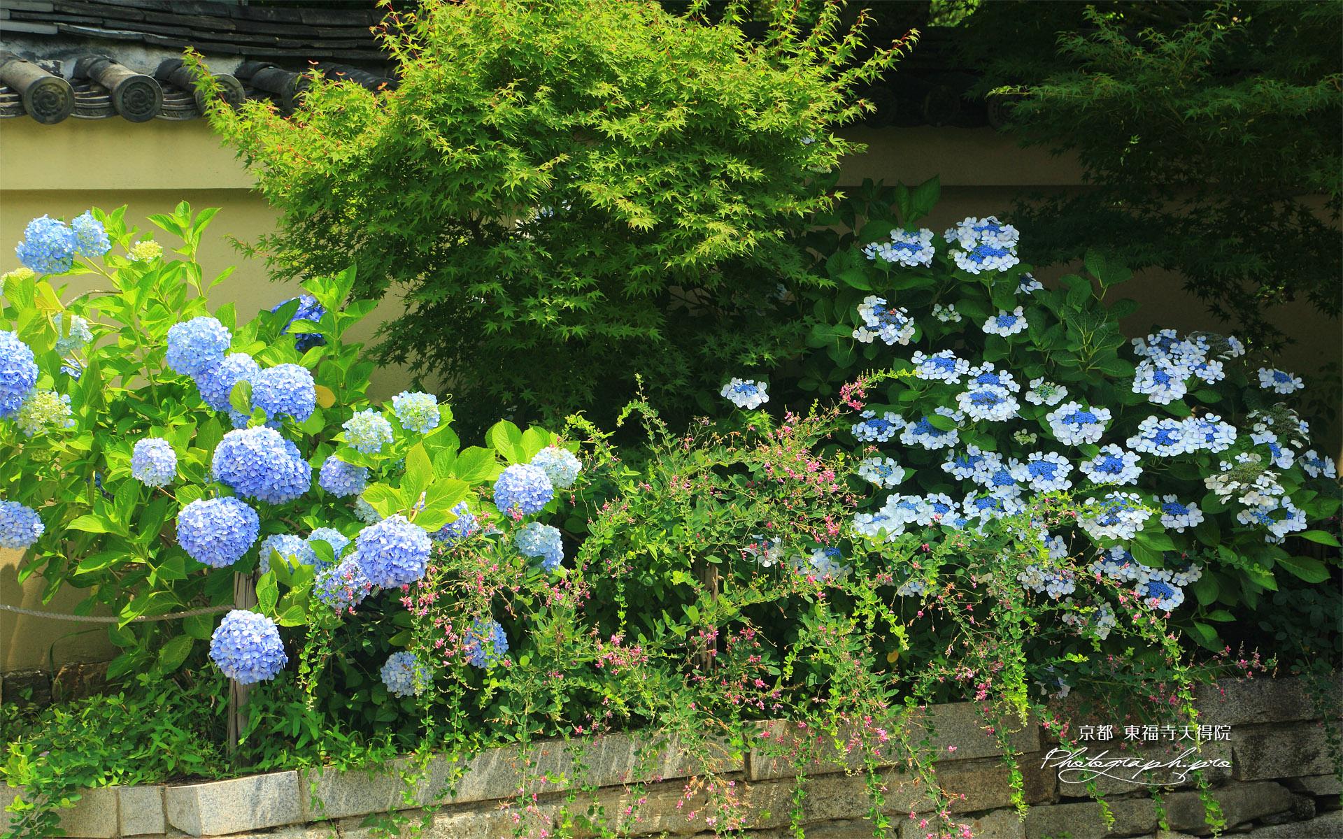天得院 紫陽花と夏萩