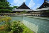 万寿寺 梔子と築地塀