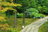 勝林寺 庭園のあじさい