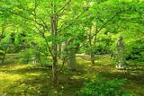 上賀茂 愛染倉庭園の沙羅双樹