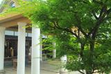 飛行神社 青椛越しの拝殿