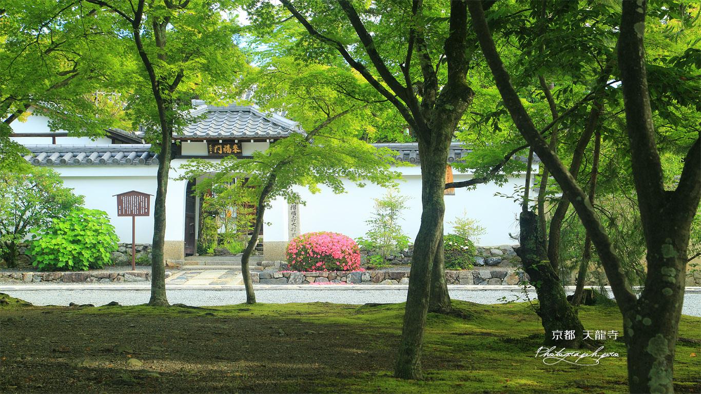 天龍寺 前庭の新緑と来福門 壁紙