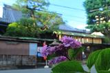 平等寺 紫陽花越しの不明門