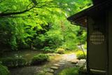 上賀茂社家町 新緑の西村家裏庭
