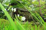 禅華院 八重桔梗と三門