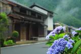 鞍馬本町の紫陽花