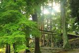 京都 青椛の静原神社