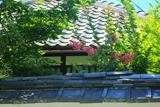 妙傳寺本光院のサルスベリ