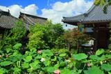 大蓮寺 きれいな蓮の咲く寺