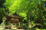 京都 青椛の中川八幡宮社