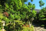 京都中川 宗蓮寺の台杉と夏草