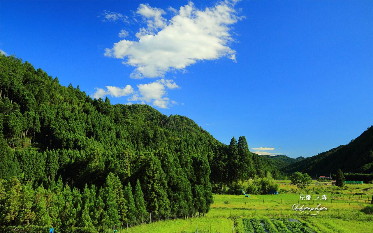 夏空と大森の田園 の壁紙 1280x800
