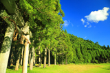 京都 夏空の大森加茂神社