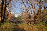 邑楽町 長柄神社の桜