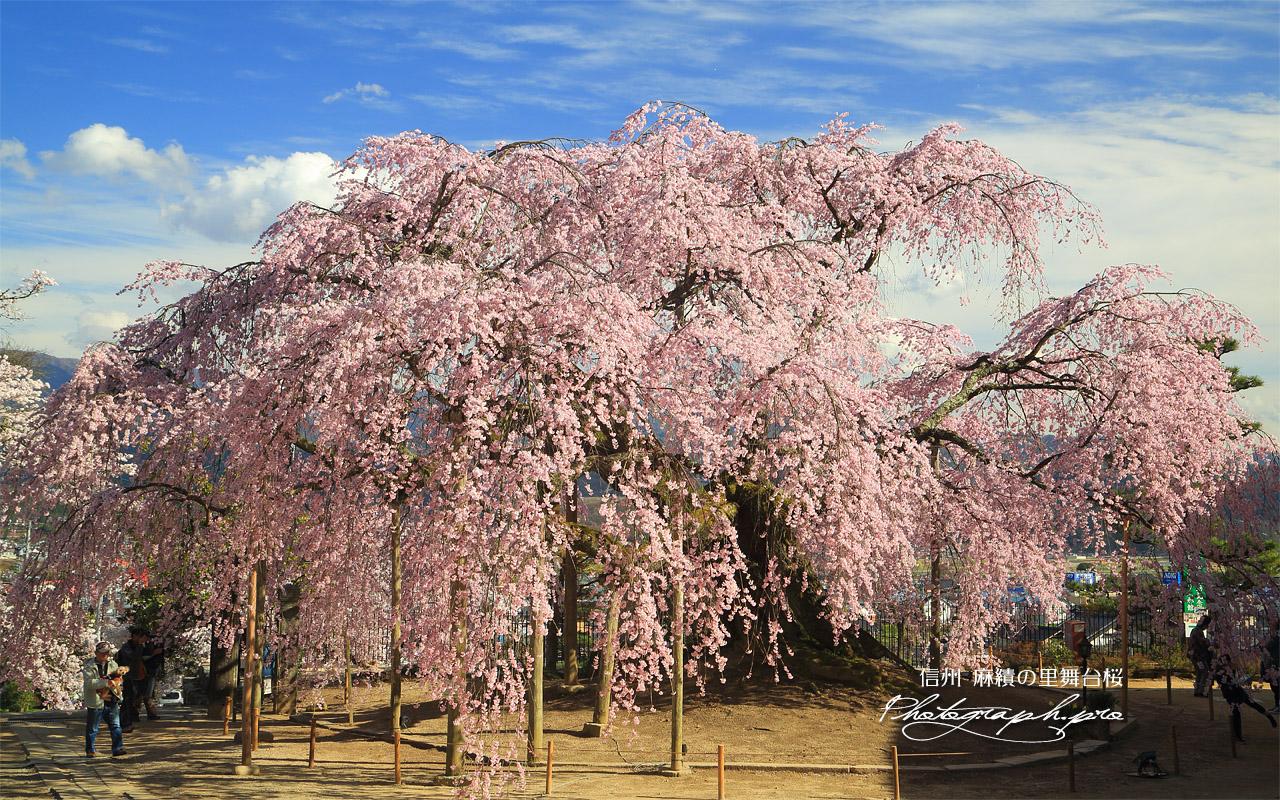 麻績の里舞台桜 壁紙