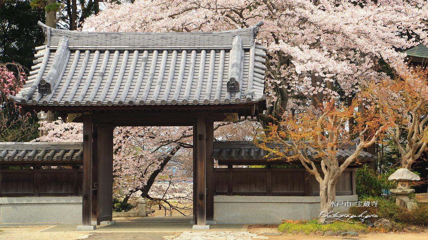 水戸市 宝蔵寺の桜 壁紙