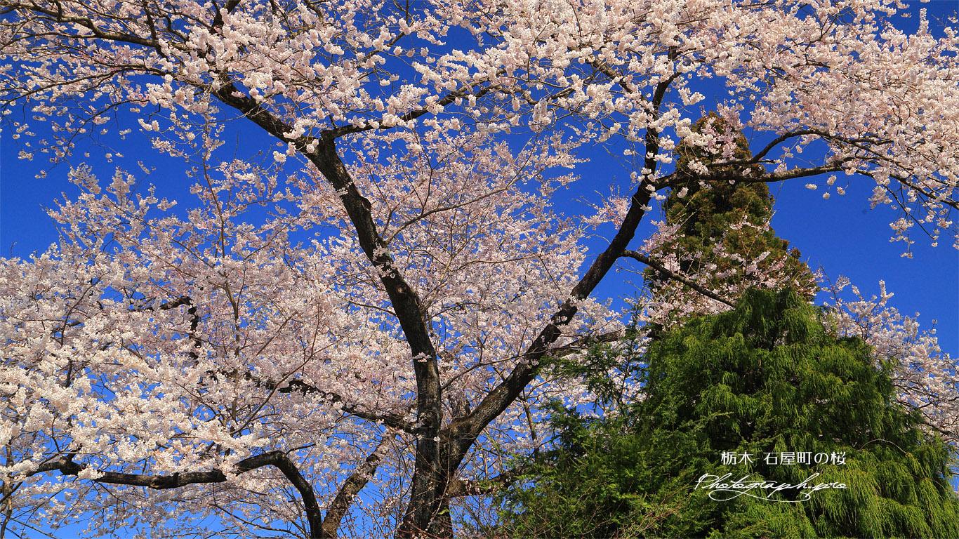 石屋町の桜 壁紙