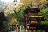 水澤観音のしだれ桜