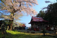 清龍寺の知恵桜